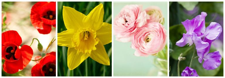 Most Popular Flowers best flowers for spring - most popular spring flowers