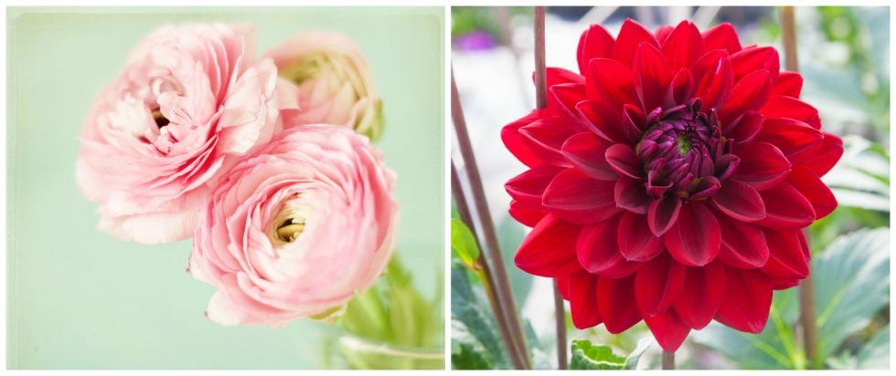The Most Popular Flowers For Each Month Of Spring