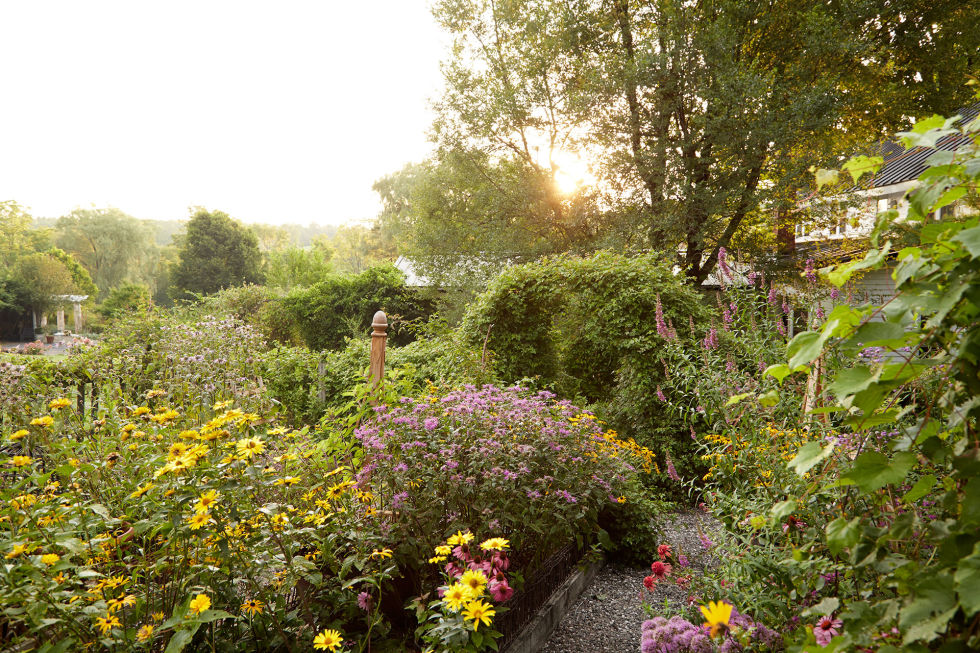 An archway covered in porcelain berry vines separates beds of black-eyed Susan, bee balm, and cat mint from a 19th-century house. The white, ruin-like columns in the distance were salvaged from a local bank.<br />