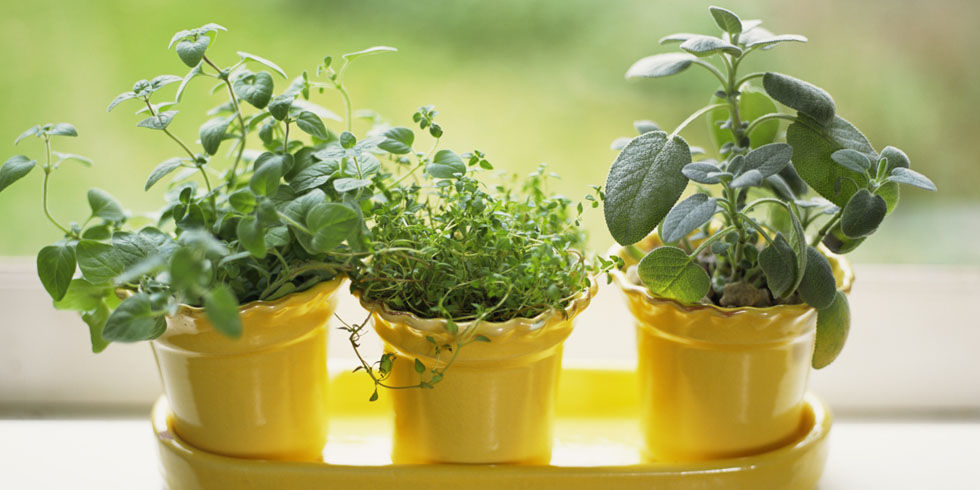 Indoor Herb Garden Mistakes How to Take Care of Indoor Herbs