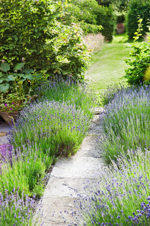 13 easy garden plants how to pick shrubs and trees for Cheap bushes for landscaping