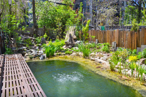 Vacation home rentals with all natural swimming summer vacation rentals for Environmentally sustainable swimming pools