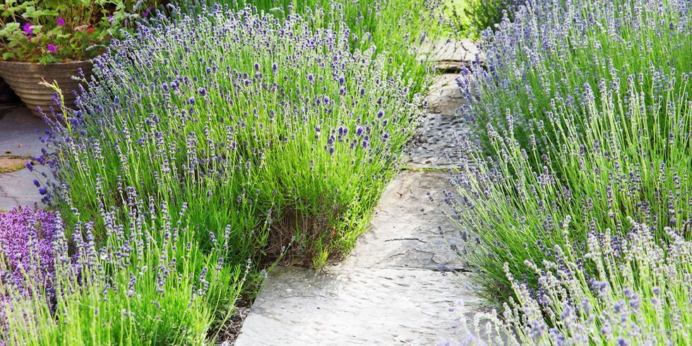 13 Easy Garden Plants How To Pick Shrubs And Trees