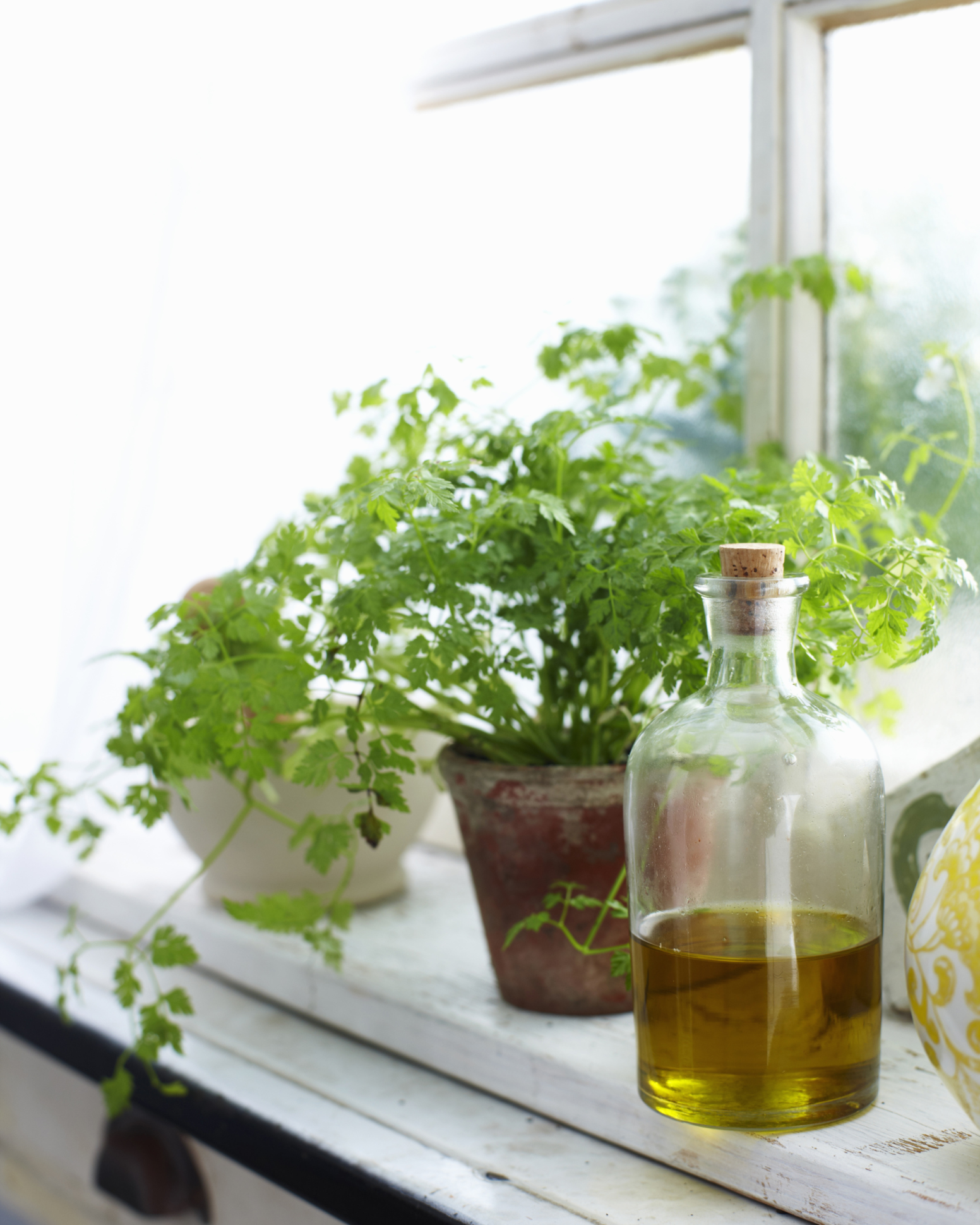 how to grow an herb garden herb growing chart
