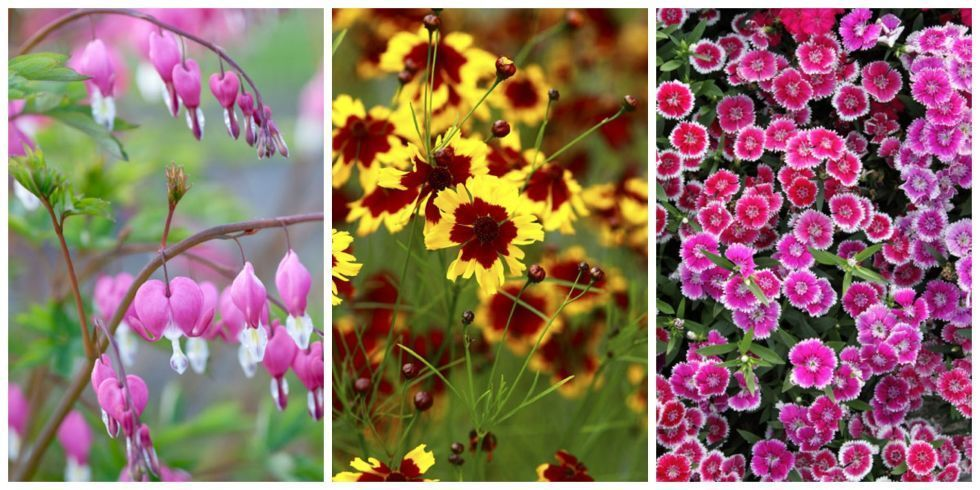 Ten Best Perennial Flowers For Your Garden - Magazine cover