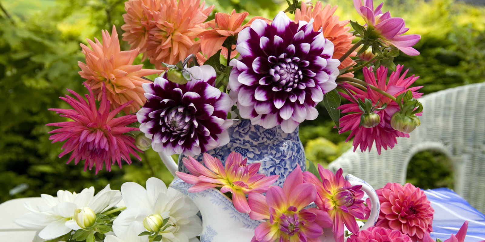 Summer Flowers The Most Popular Blooms For Every Month