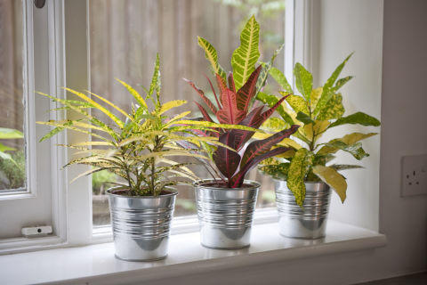 10 best house plants easy plants to care for - Beautiful house plants ...