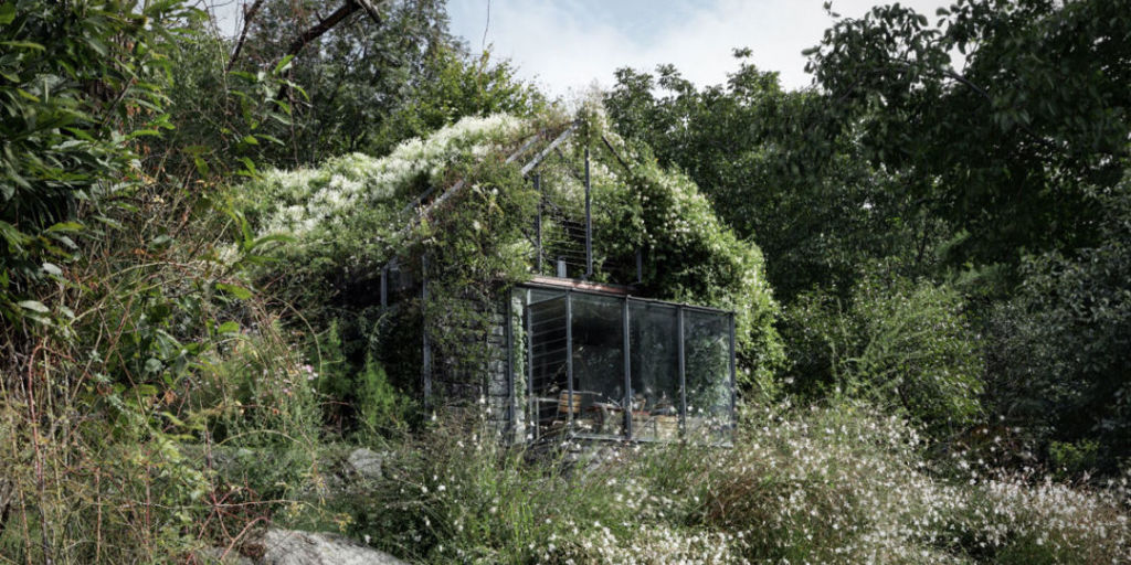 Overgrown Garden Shed Green Box Act Romegialli