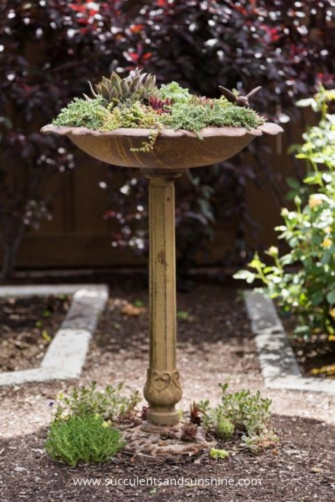 This elevated display is part sculpture, part mini-garden.<br />See more at Succulents and Sunshine »<br />
