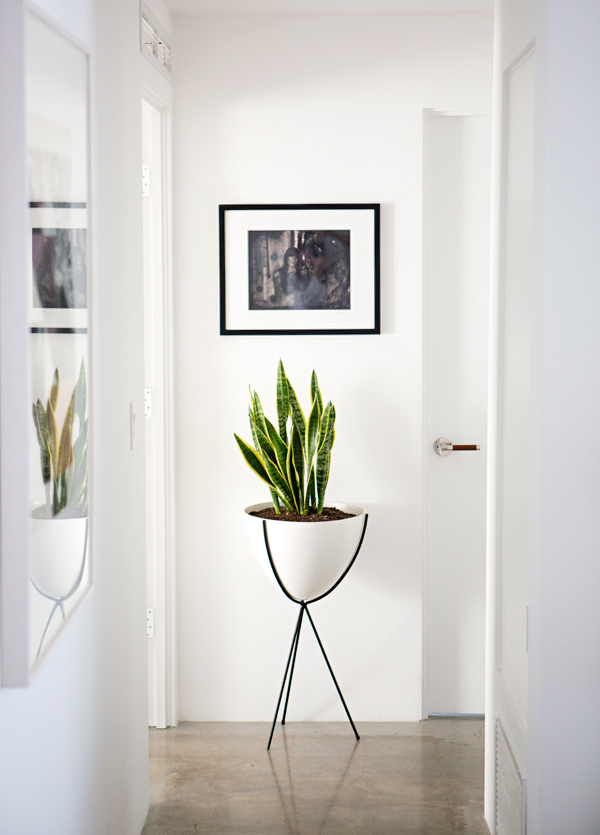 15 best indoor plants good inside plants for small space gardening - Small trees for indoors ...