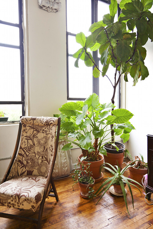Best Indoor Plants Good Inside Plants For Small Space Gardening