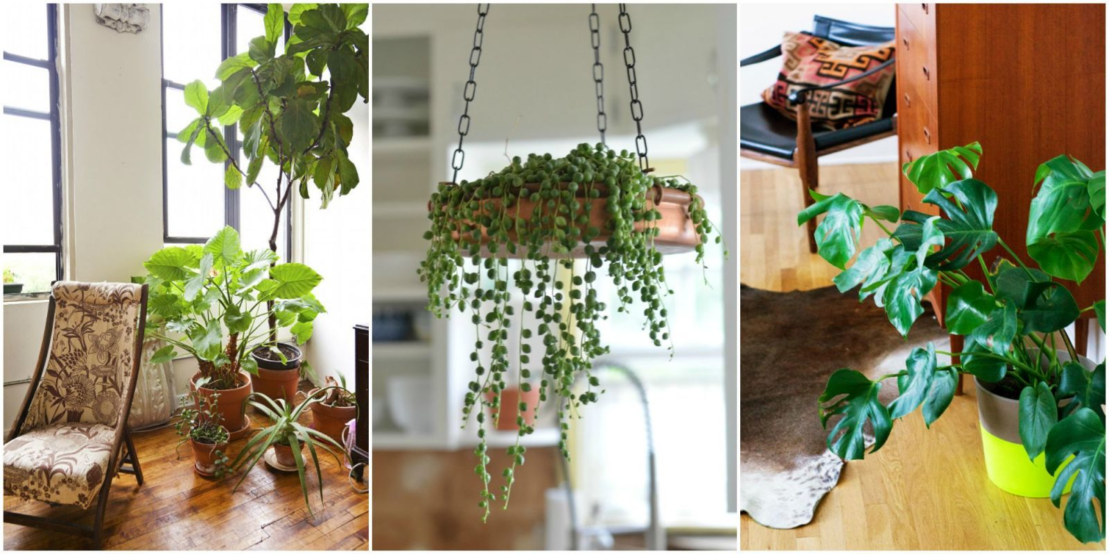 15 Best Indoor Plants Good Inside Plants for Small Space Gardening