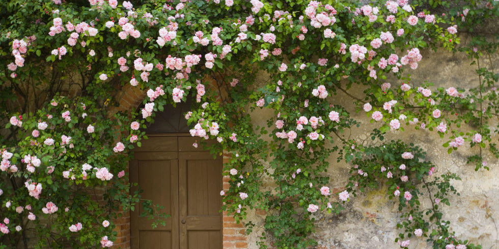 11 times climbing vines totally stole a front dooru0027s spotlight - Vining Flowers