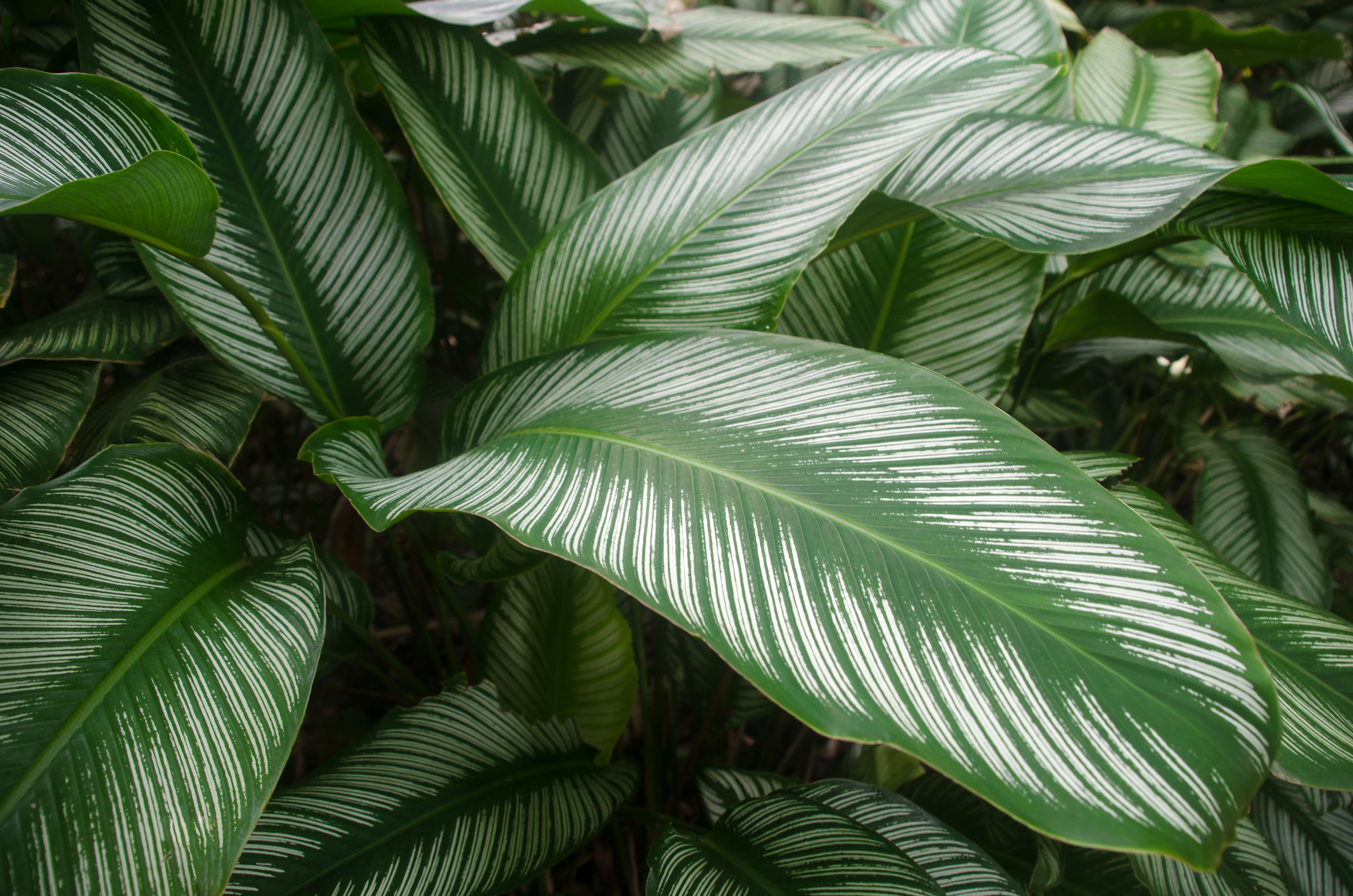 How Plants That Are Difficult To Grow High Maintenance