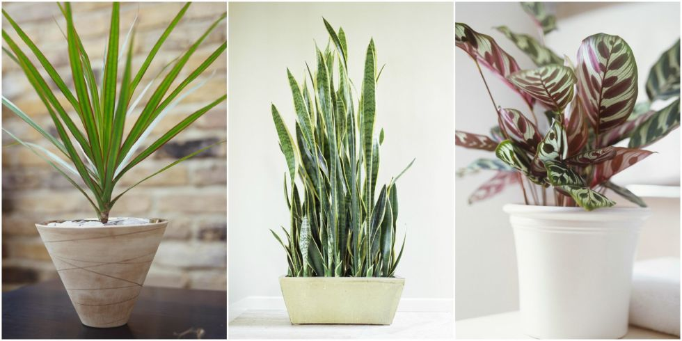 Delightful Low Light Houseplants Plants That Don T Require Much Light