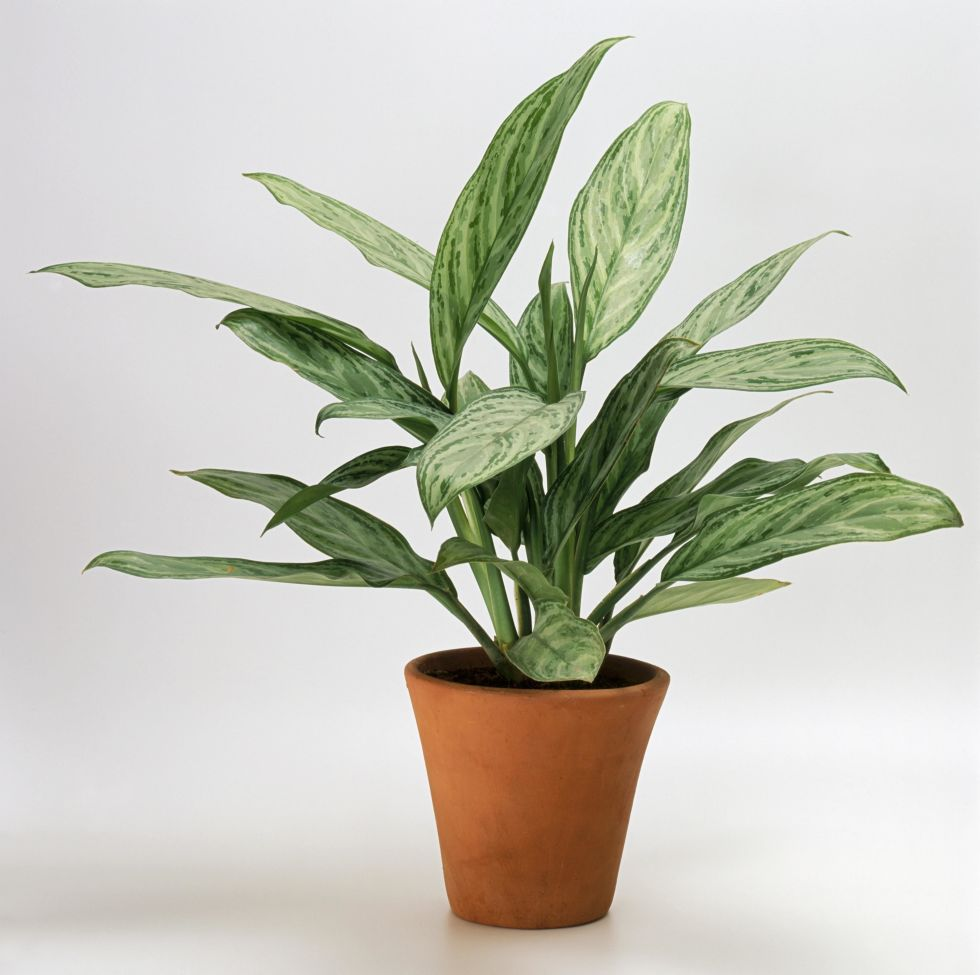 Low Light Flowering House Plants low light houseplants - plants that don't require much light