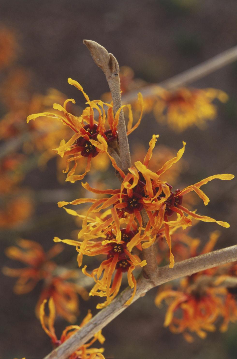 Flowers that bloom in winter months - Flowers That Bloom In Winter Months 21