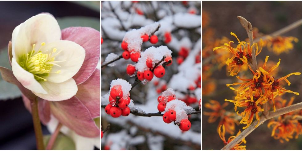 Plants That Bloom in Winter - Flowers That Develop In the Cold