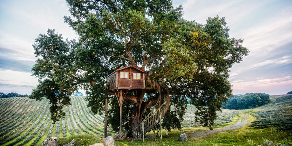 Best Treehouses - Amazing Tree House Vacations