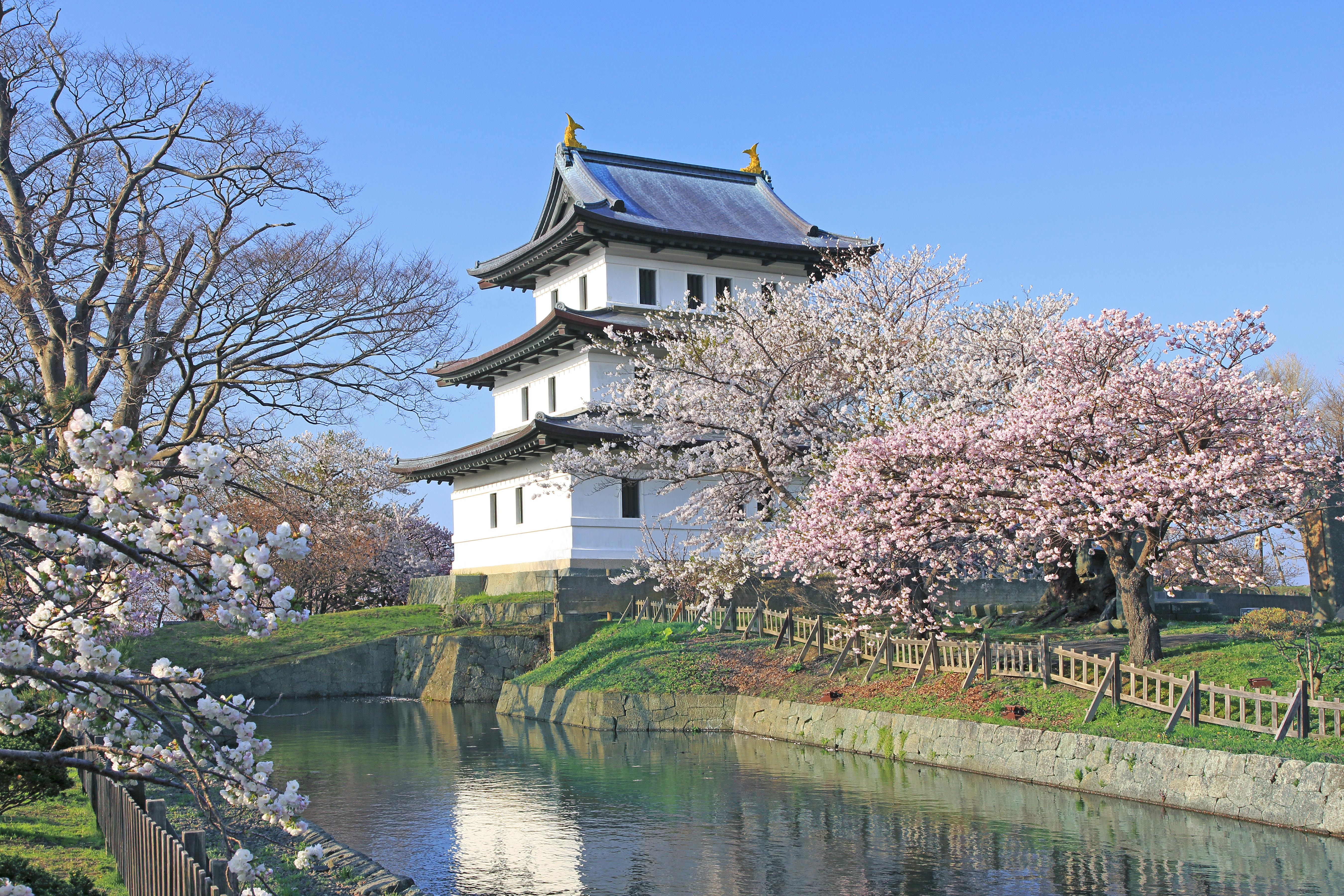 National Cherry Blossom Festival Trivia Things You Need