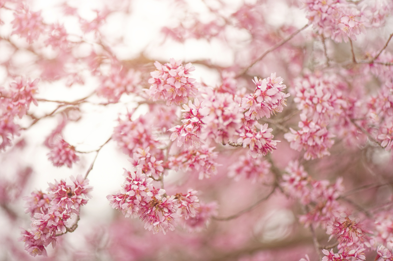 110 best Spring images on Pinterest