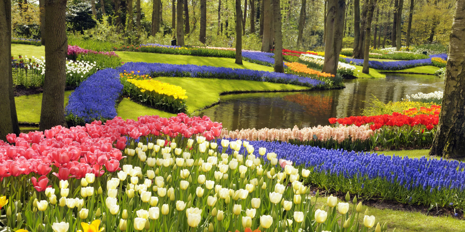 Best flower and ornamental gardens prettiest nature for Beautiful flower landscapes