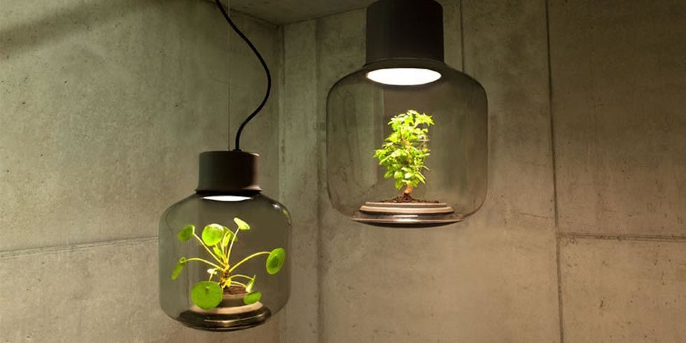 Grow Lamp for Windowless Rooms - Grow Plants Without Sunlight