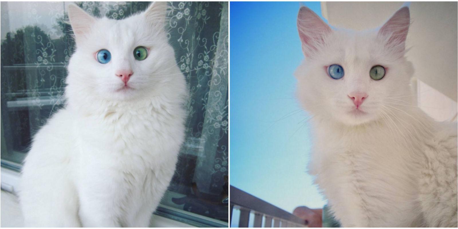 Aloş The Cat Cats Of Instagram