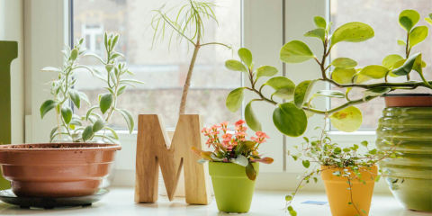 How To Revive A Dying Houseplant How To Bring A Nearly