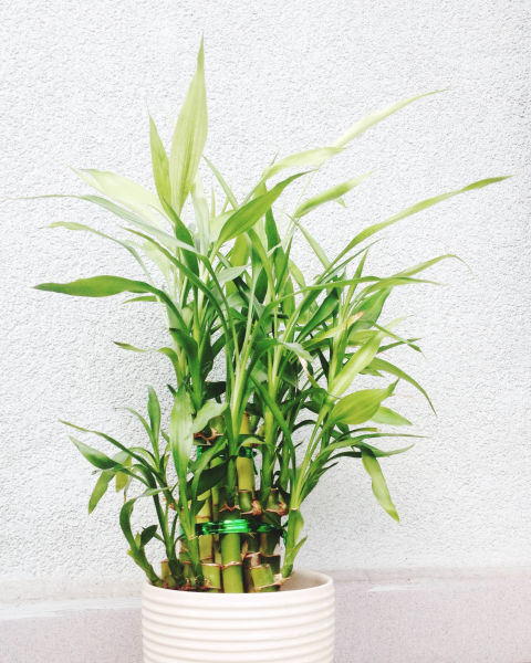 The best office plants plants that will thrive on your desk - The best office plants ...
