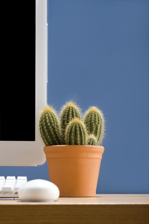 The best office plants plants that will thrive on your desk for Office plants no natural light