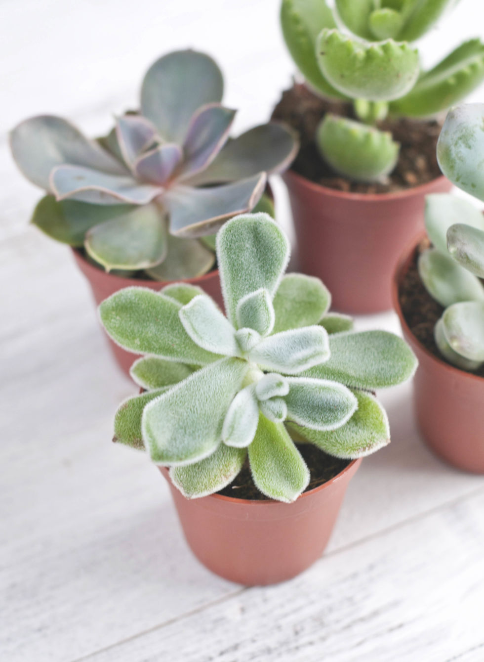 the best office plants - plants that will thrive on your desk