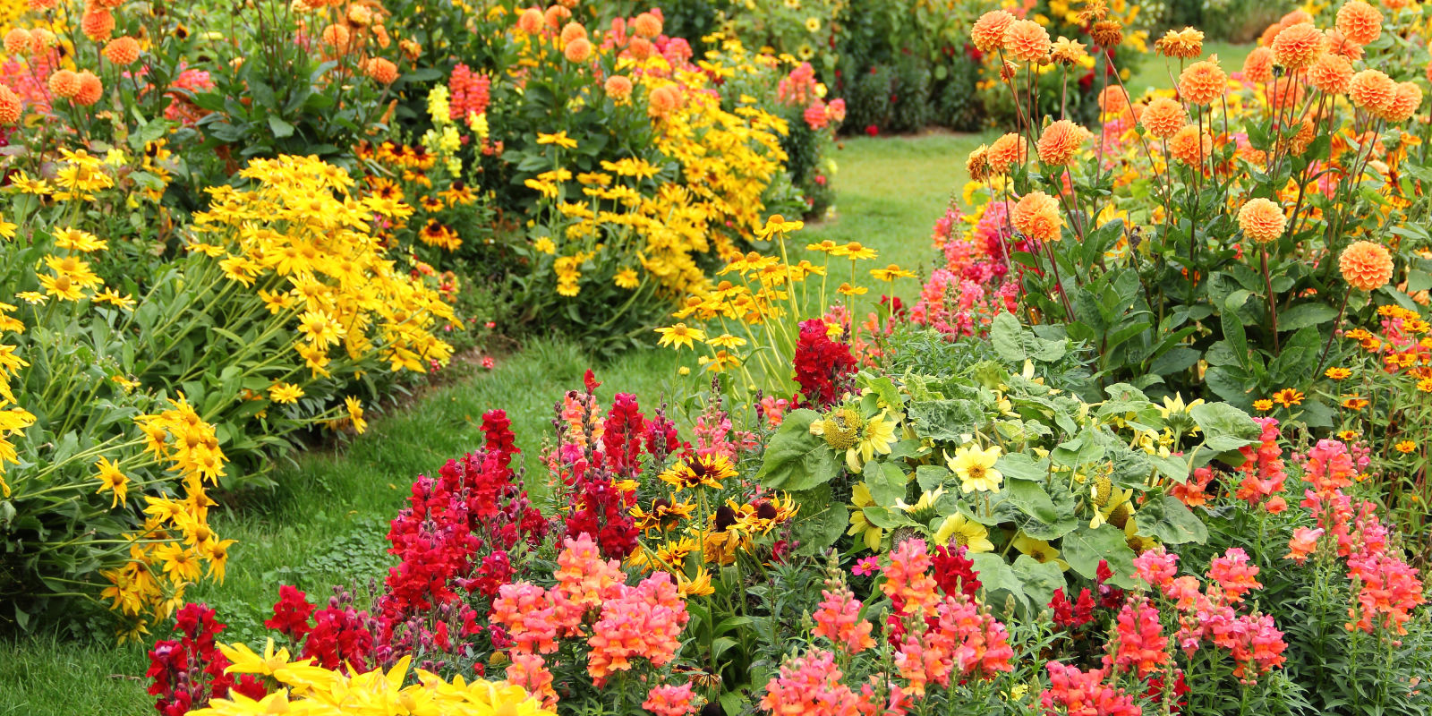 25 best fall flowers plants flowers that bloom in autumn for Garden arrangement of plants