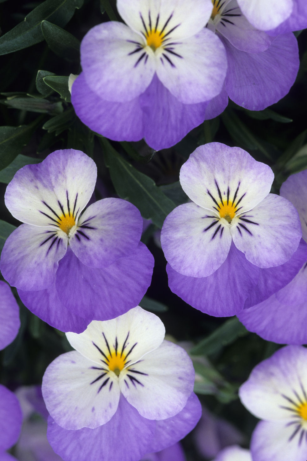 Common Purple Garden Flowers 25 best fall flowers & plants - flowers that bloom in autumn