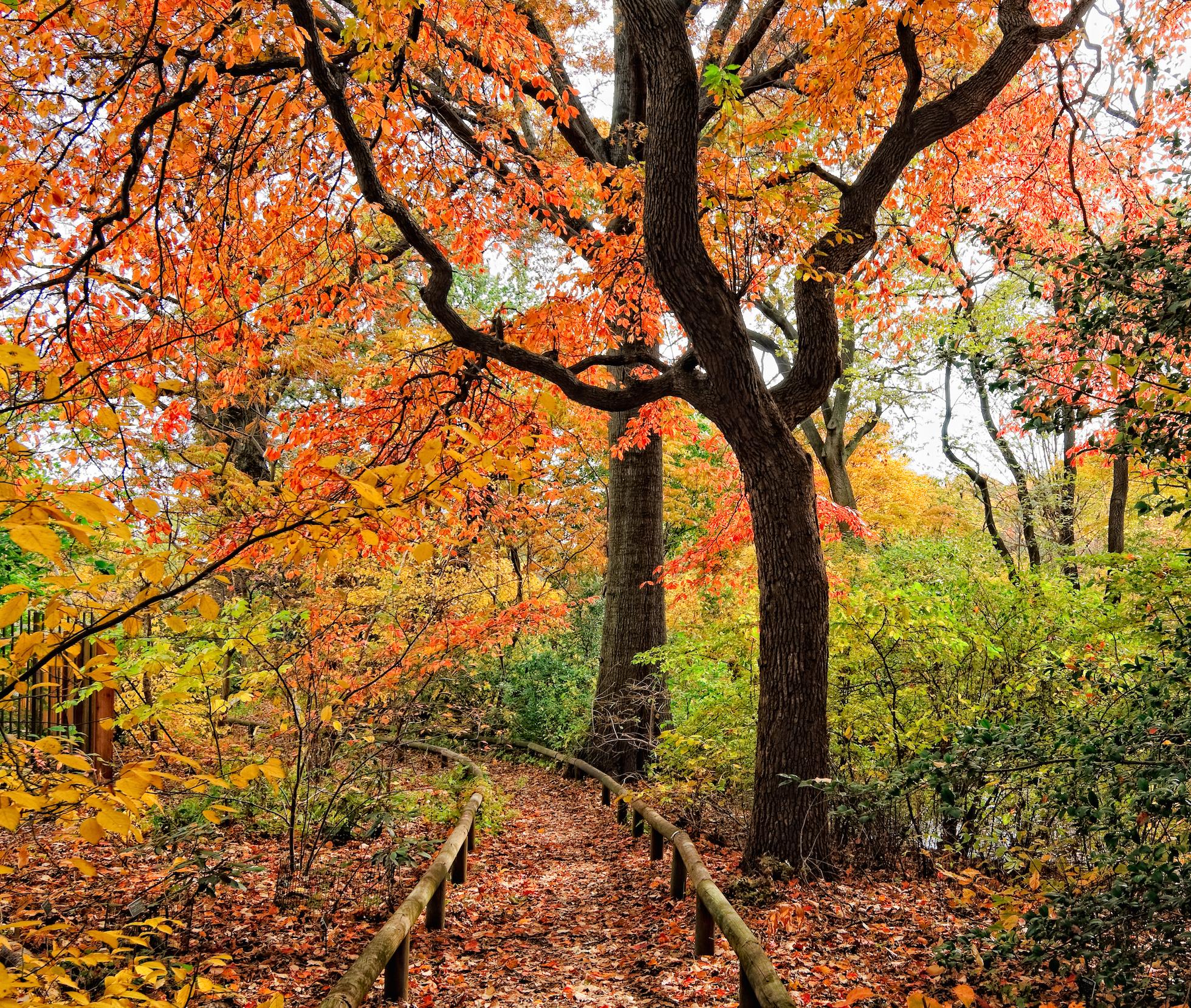 16 Beautiful Public Gardens To Visit In Fall