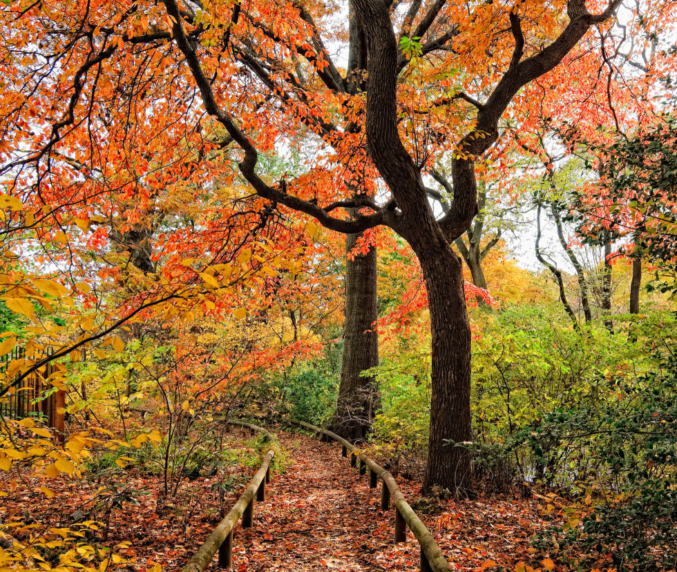 16 Beautiful Public Gardens to Visit in Fall Best Public Gardens