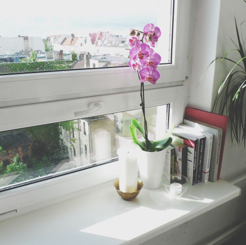 Graceful and almost sculptural, orchids are one of life's most accessible luxuries. They also bloom year-round, bringing you a touch of mood-enhancing color during winter's gloomiest days. Perhaps this is why Feng Shui practitioners love to use orchids when increasing positive energy in a room.