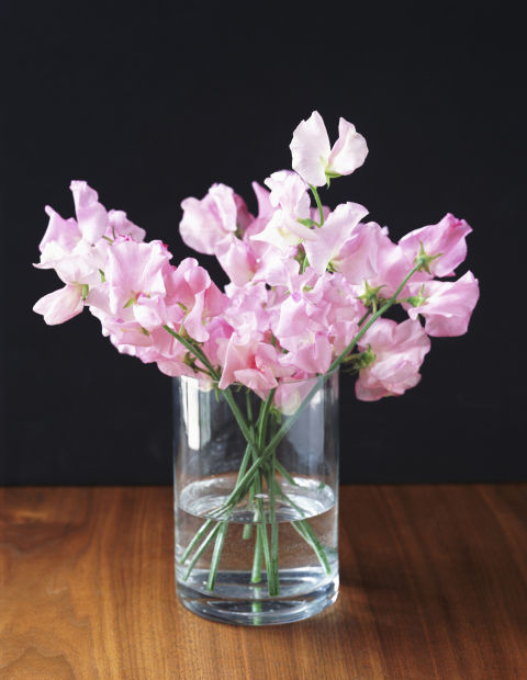 These gorgeous flowers also ranked highly in Domoney's survey for a similar reason to Lily of the Valley. Respondents stated that seeing sweet peas triggered happy memories of childhood.