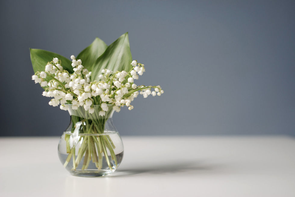 Garden expert David Domoney set out to do a three-month informal study to find out what plants inspired feelings of positivity. Respondents overwhelmingly favored Lily of the Valley as a happy-boosting plant, mostly because they associated the fragrant blooms with cherished memories.