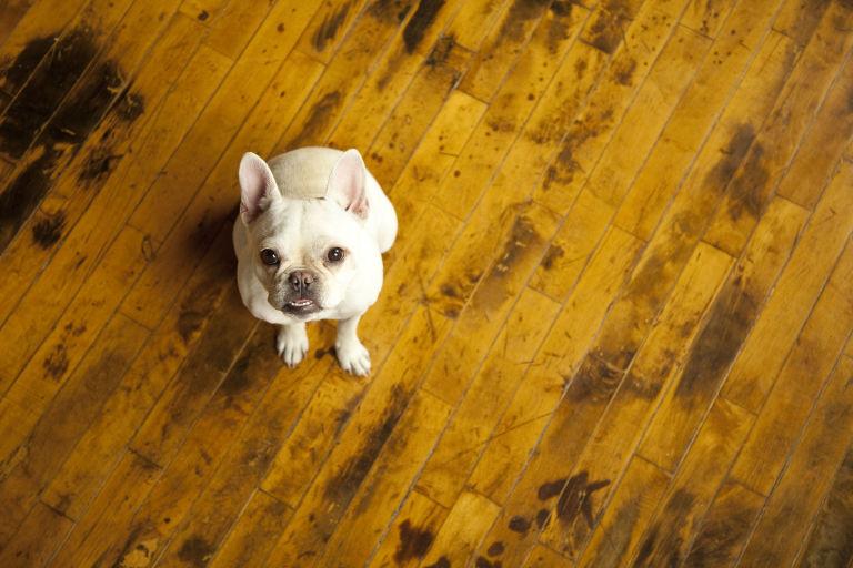 Stop Putting Hardwood Floors In Every Room - Dog booties for hardwood floors