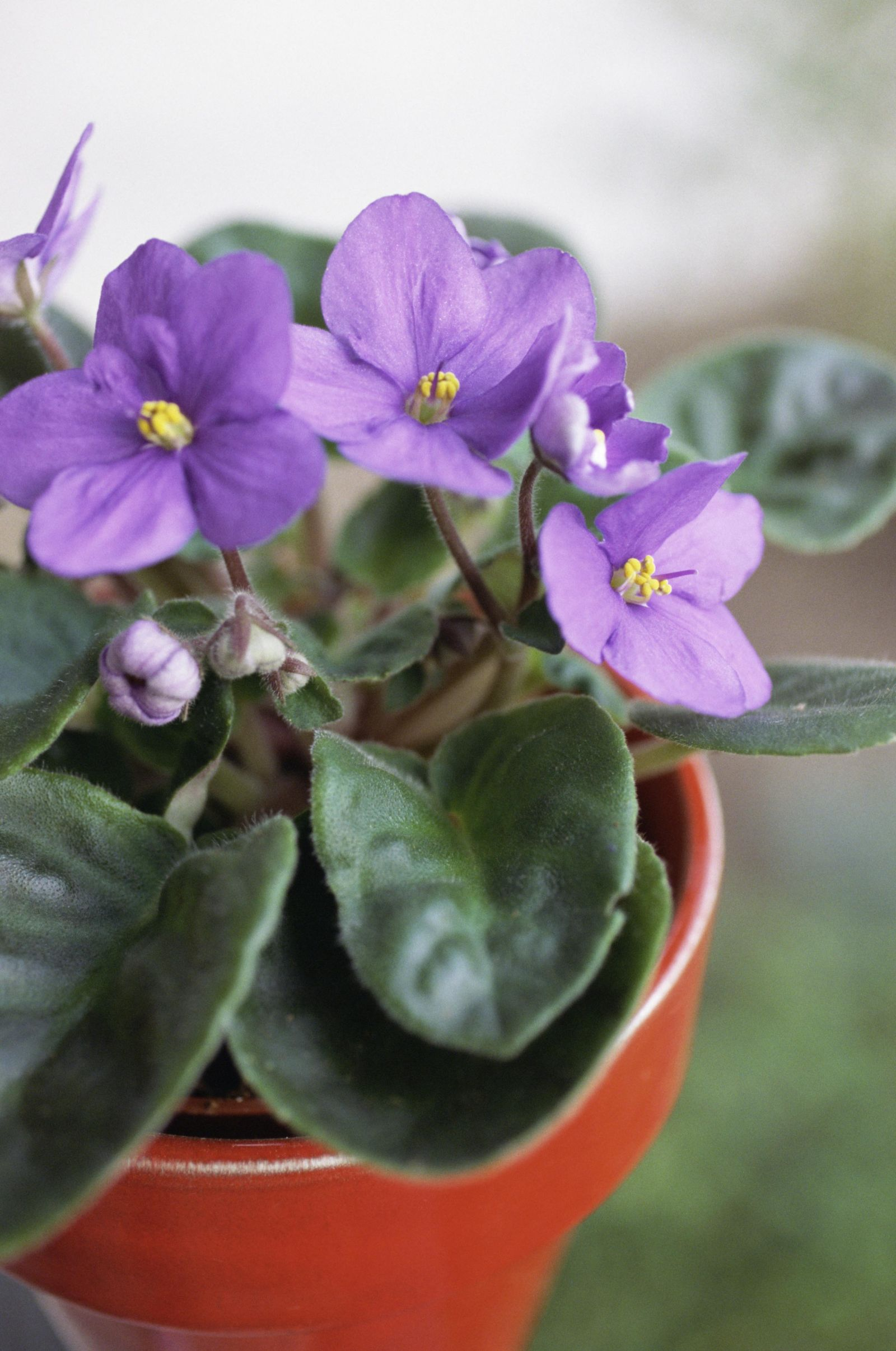 100+ ideas bedroom eyes african violet on www.weboolu
