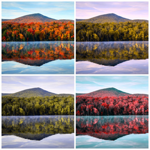 what color blindness looks like simulate different color