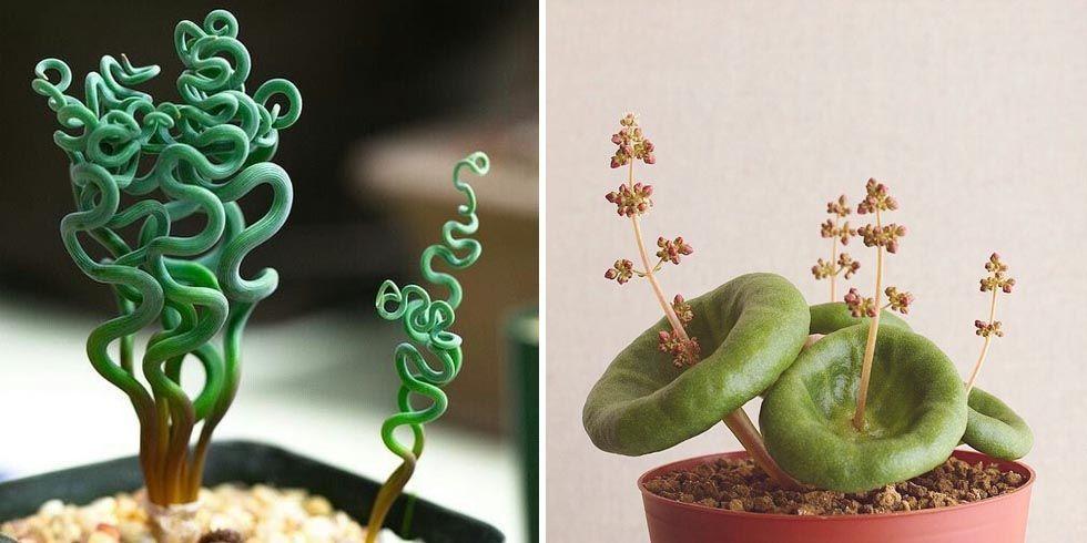 stange houseplants weirdest indoor plants. Black Bedroom Furniture Sets. Home Design Ideas