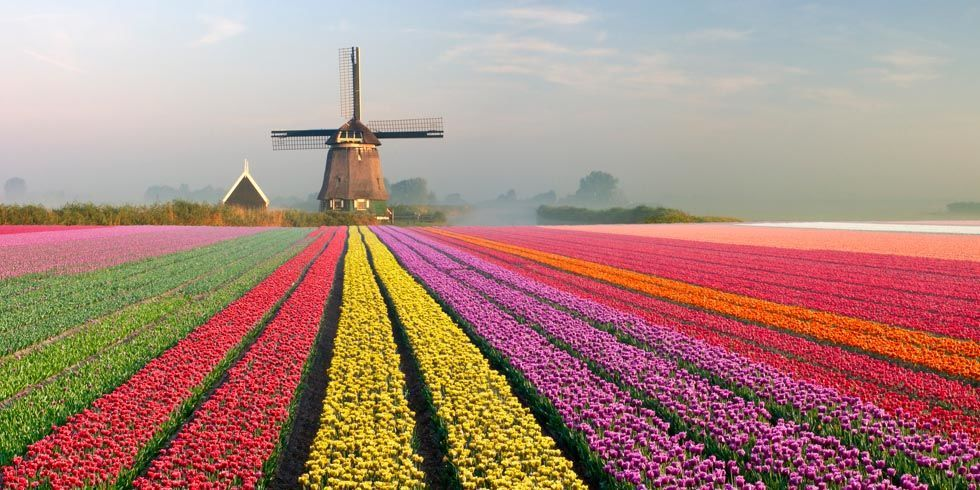 Tulip Fields In Europe Beautiful Photos Of