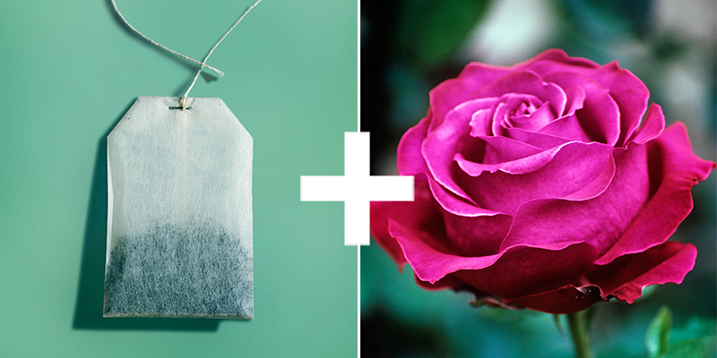 New uses for tea bags how to use old tea bags - Uses for tea bags ...