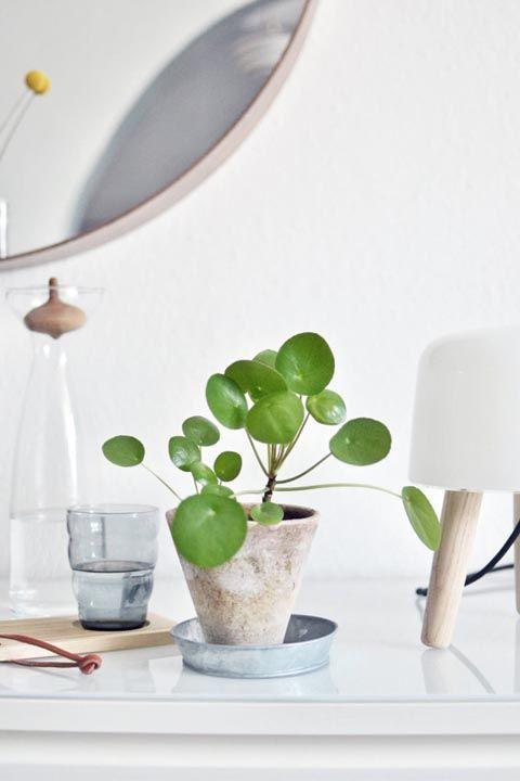 18 best indoor plants good inside plants for small space. Black Bedroom Furniture Sets. Home Design Ideas
