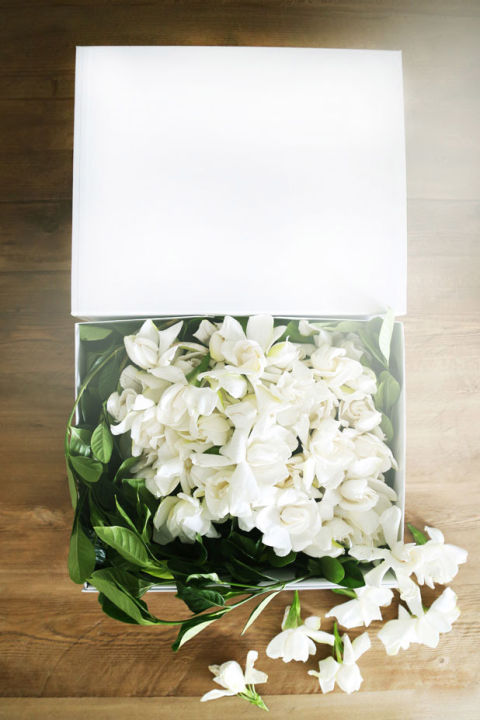 high camp supply co gardenias luxury flower delivery