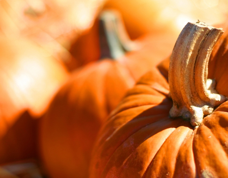 Pumpkins: the perfect orange and the perfect symbol of fall.