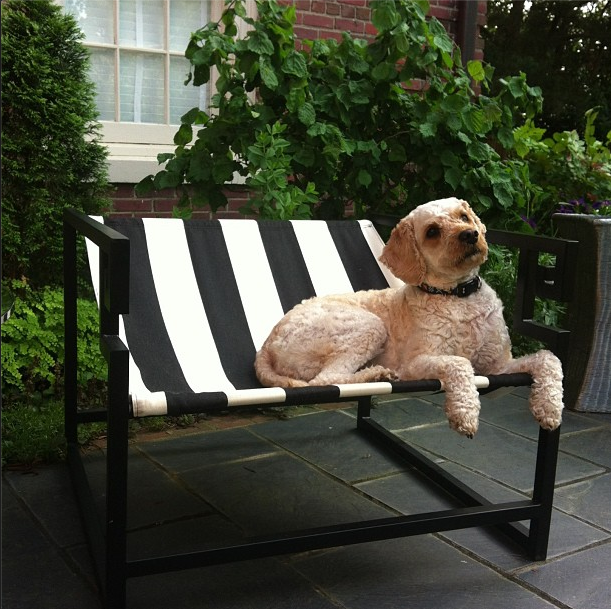 Striped outdoor furniture cute dog chic space - Best dogs for small spaces pict ...