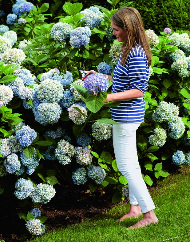 Living room paint ideas - Blue And White Aerin Lauder Aerin Lauder Hamptons Home
